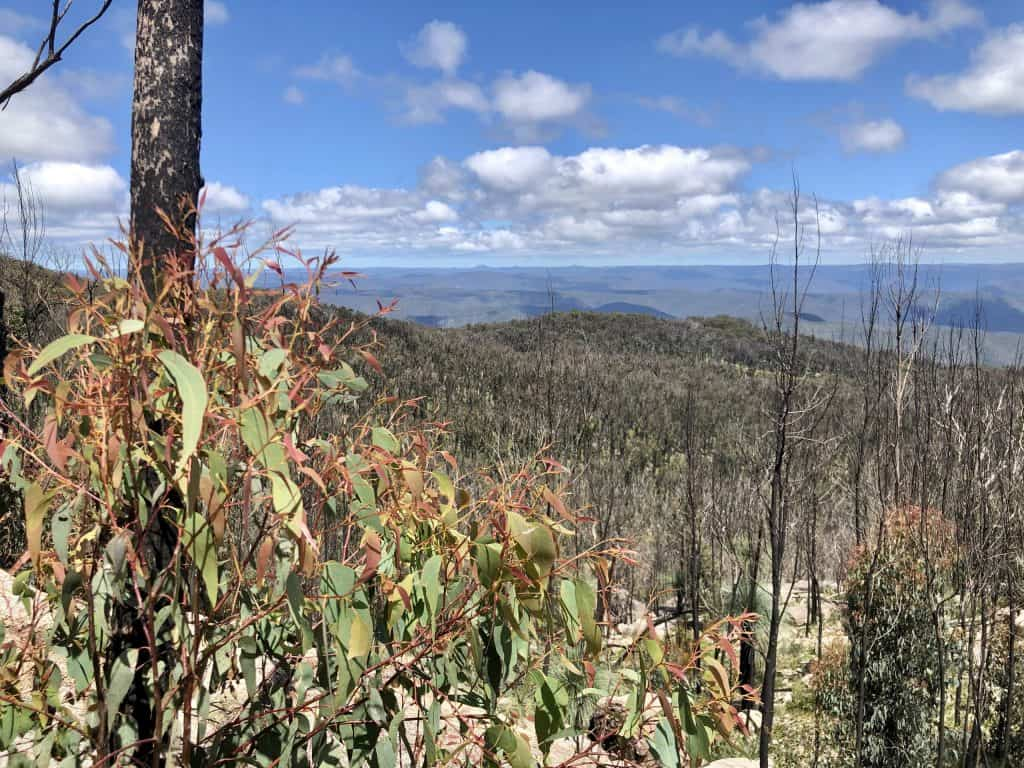 Guy Fawkes Lookout