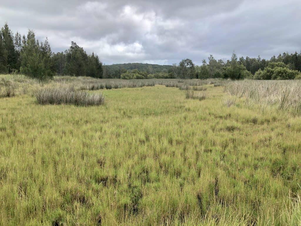Boyters Lane Bird walk salt marsh