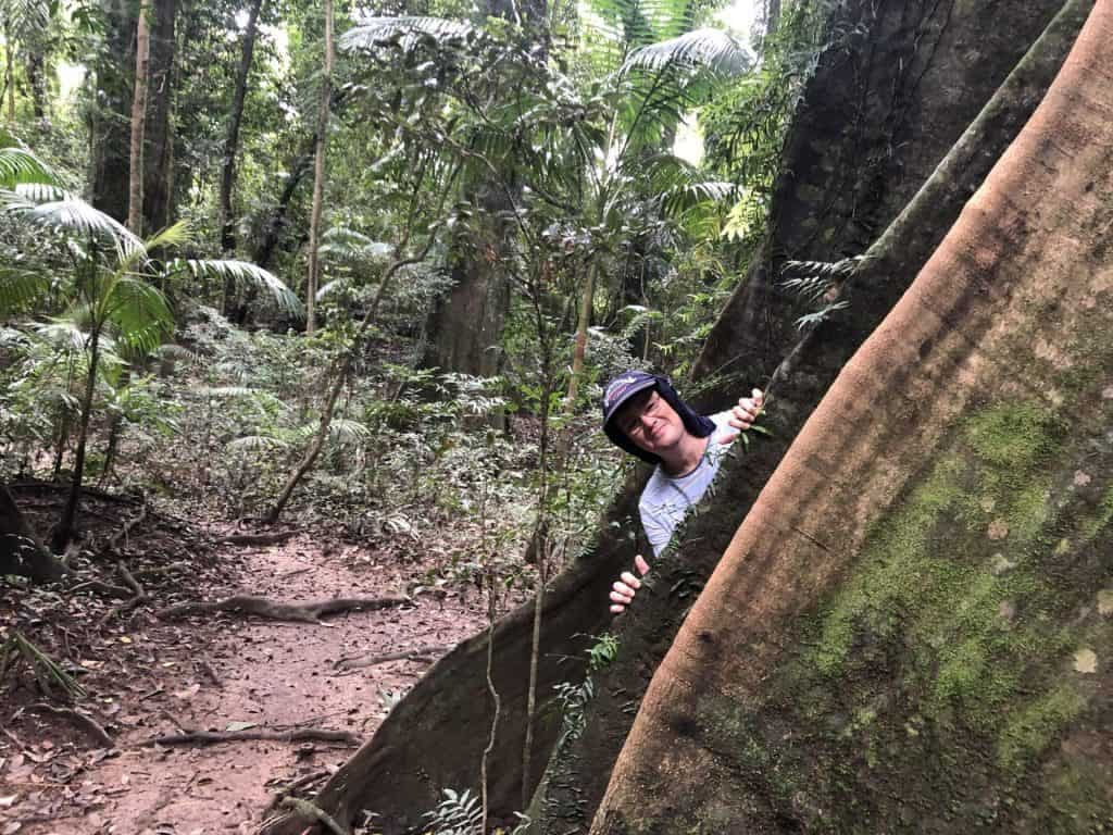 Hide and seek in the buttresses on the Coramba rainforest walk