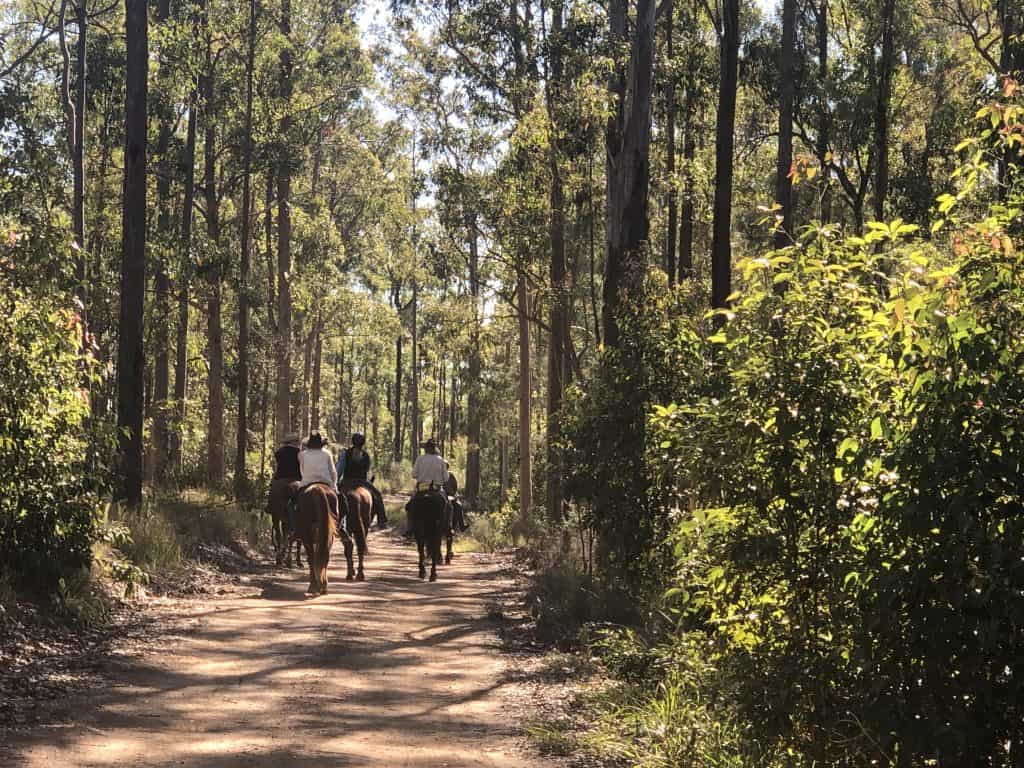 Horse riders in Tamban Forest